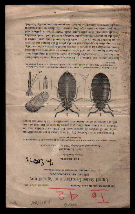 The Bedbug (United States Department of Agriculture, Circular No. 47, Revised Edition February 26, 1907). C. L. Marlatt, United States Department of Agriculture.