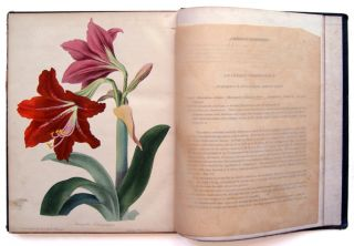The Floral Magazine and Botanical Repository [Volume I]