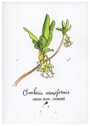 Blank Journal - Indian Plum Osoberry Botanical Cover Art